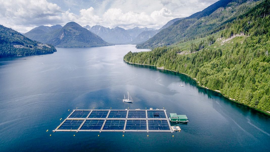 SFU student examines the murky waters of salmon farming in ...