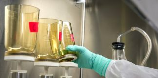 A gloved hand reaches for a beaker. There are three yellow-tinted beakers in a lab and an arm wearing a lab coat and green gloves picks up the third beaker.